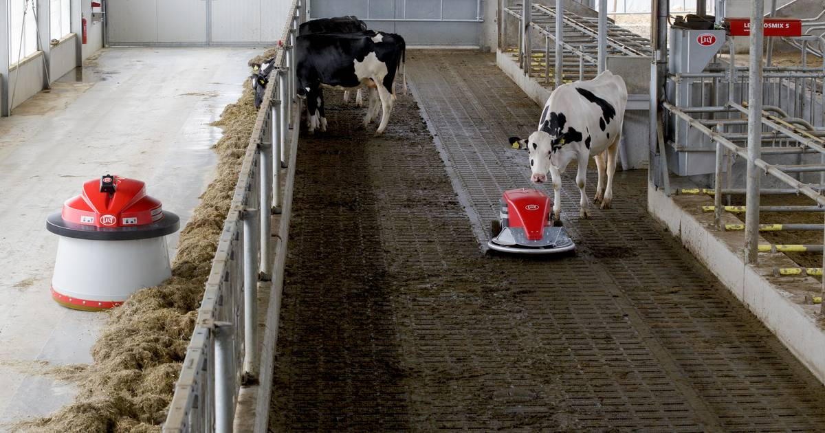 Barn Cleaner Barn Hygiene Slatted Floors Discovery Lely