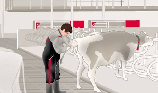 The importance of heat recognition and how Lely can help with this
