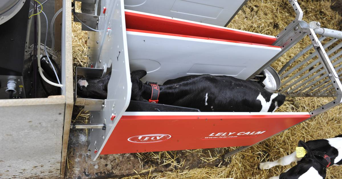 Automatic Calf Feeder Calf Development Calm Lely