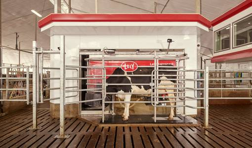 Lely demonstrates: robotic milking is possible without pelletized concentrates