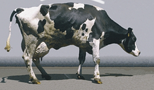 Lameness in dairy cows [3/3]