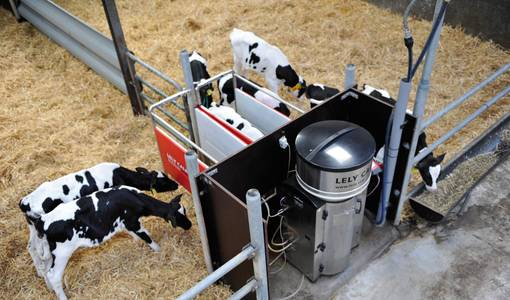Further insight into calf development with new automated calf feeders