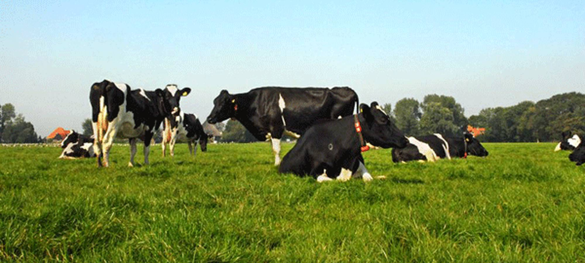 Grazing With Lely Astronauts Practical Tips Lely