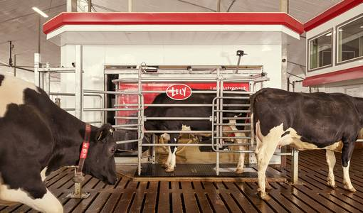 Pilot customers  on their Lely Astronaut A5